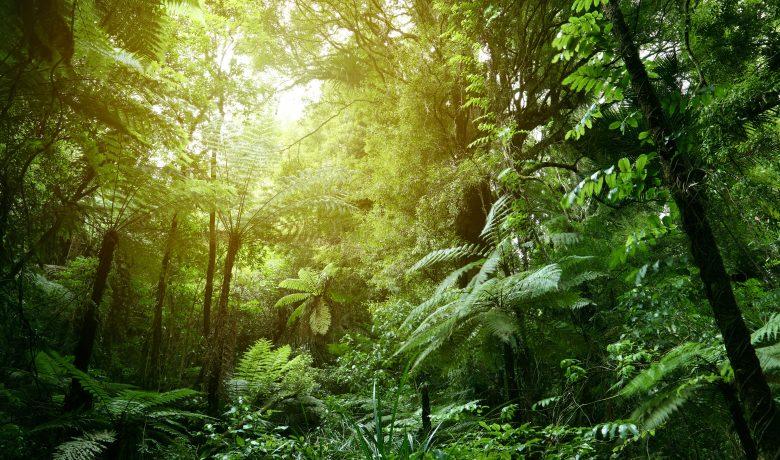 Lush Green Foliage